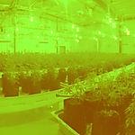 micro cultivation facility.jpg