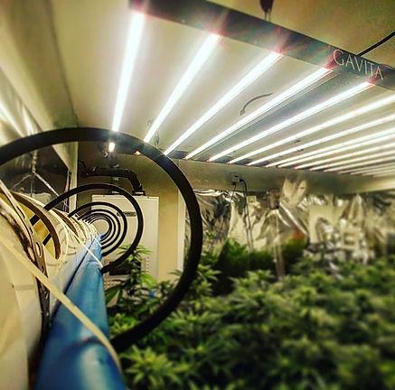 LED lighting over hydroponics.jpg