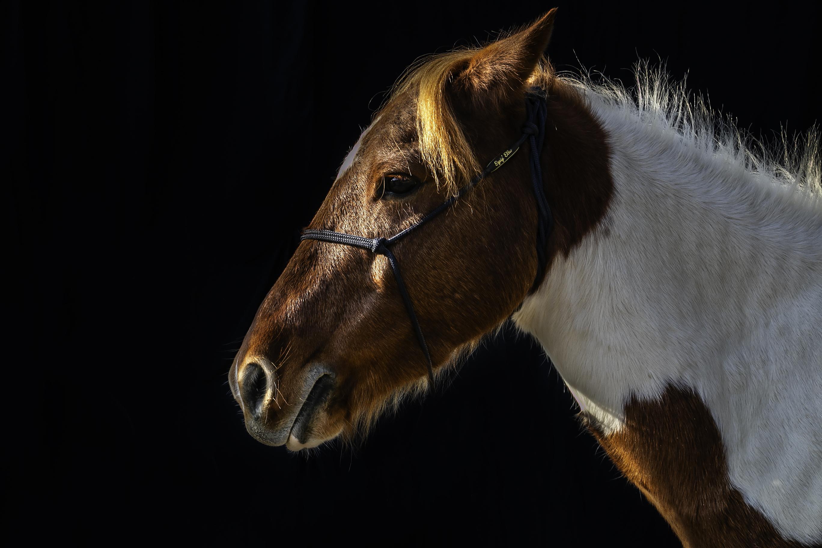 EQUILOGOS_centre_equestre_gironde_bordea