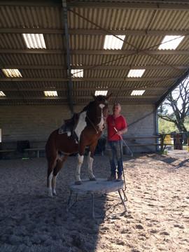 Equilogos bordeaux equitation centre equ