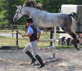 equitation bordeaux equilogos poney club