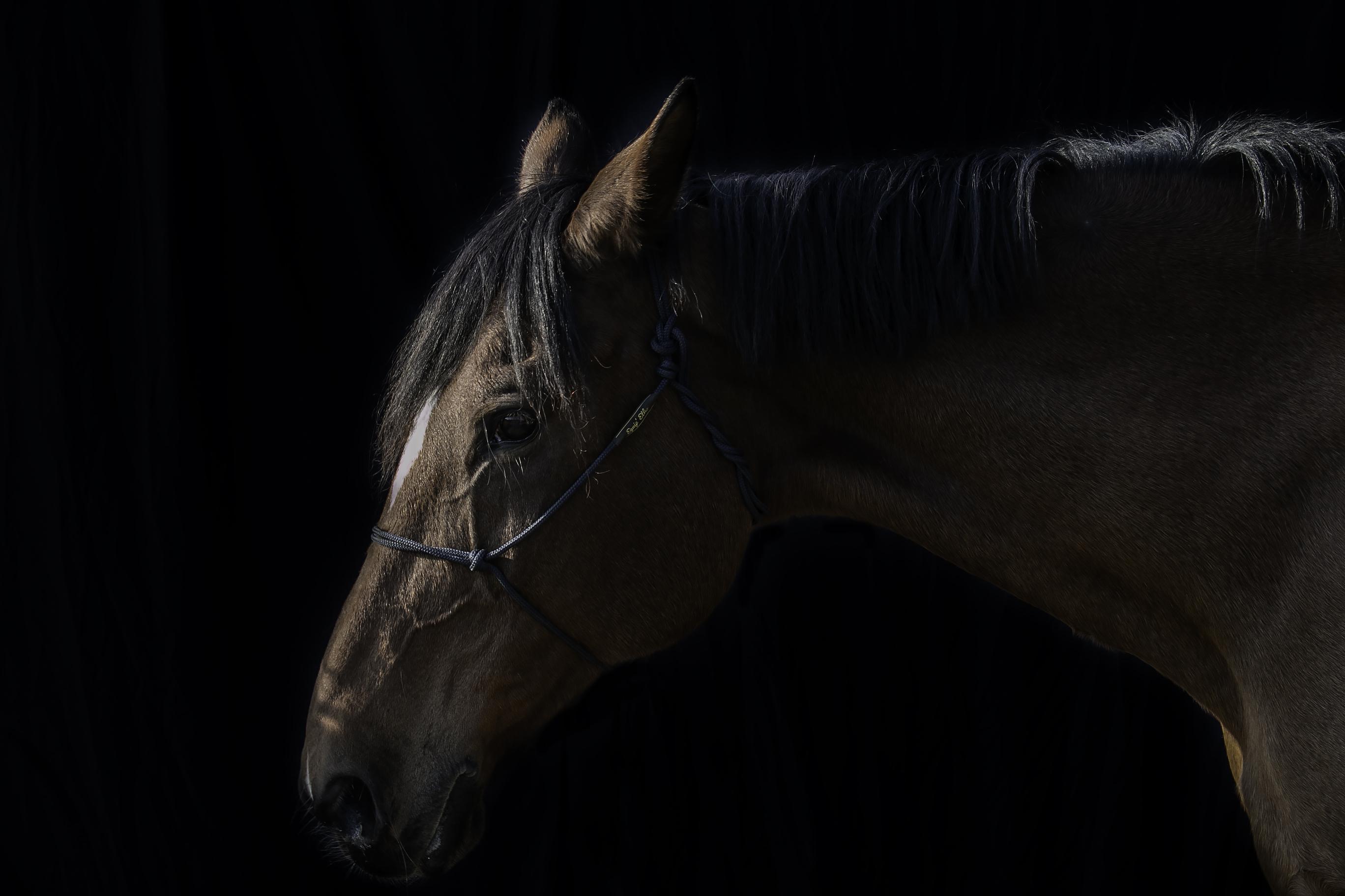 EQUILOGOS centre equestre gironde bordea