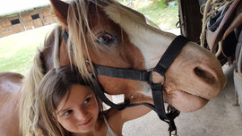 equitation bordeaux equilogos cheval pon