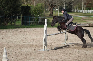 Obstacle equipe concours