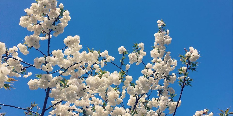 Spring revolution ° 9 squares ° 9 Monday's ° via ZOOM ° in English