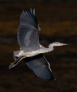 'Heron' by Jonny Andrews - Commended