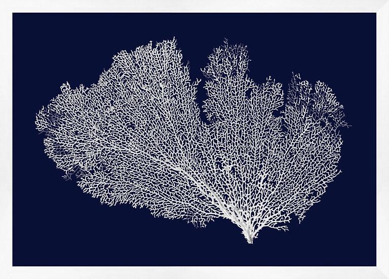 Grand Coral