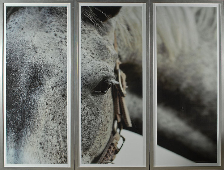 Dappled Grey Triptych