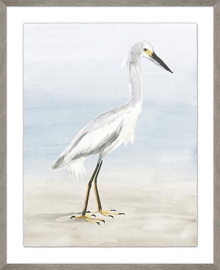 Egret Study