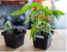 PLASMAGRI 식물재배 2.jpg