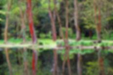 Lake Paff.jpg