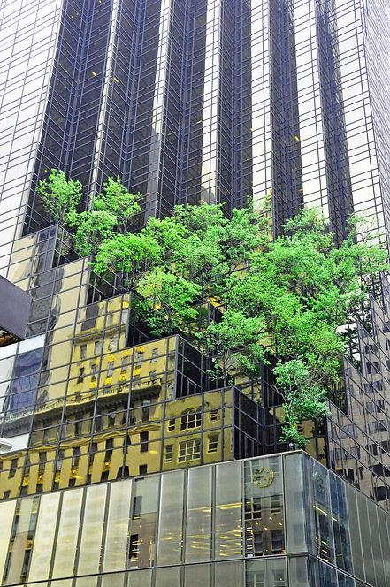 Dettmer Fotografie New York