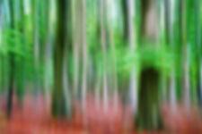 Waldesrauschen.jpg
