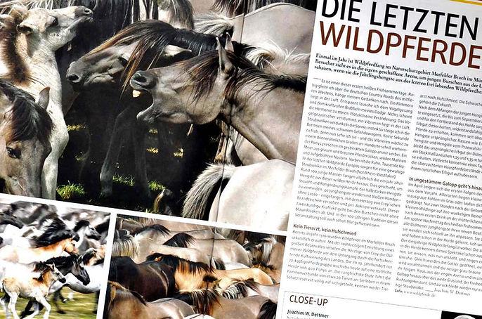 Wildpferde Fotografie Dettmer