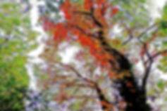 TreeOnFire.jpg