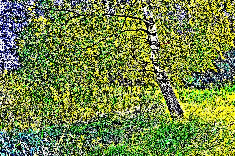 Noch ein Baum in