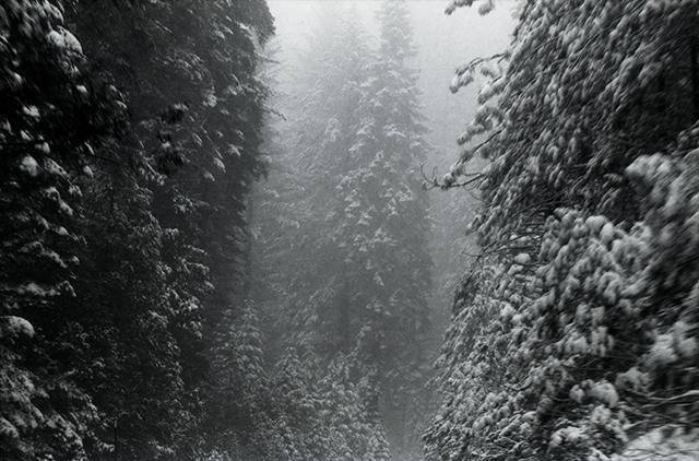 Snow Trees 720 Correct011