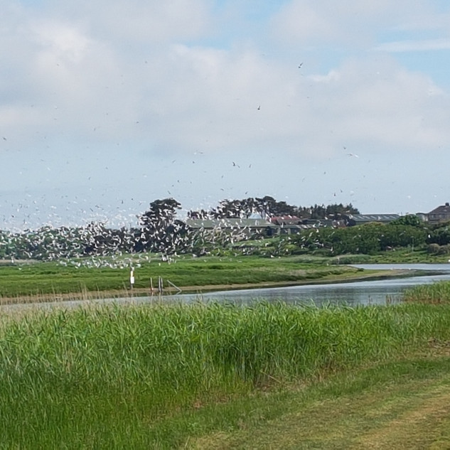 Birds flying over one of the many islands