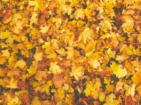 Seasonal Reflections - Raking Leaves In The Beloved Community