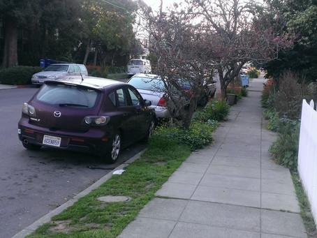 Mornings in Berkeley