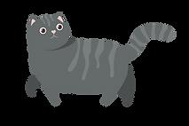 חתול תל אביבי