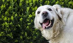dog-2753369_1920.jpg