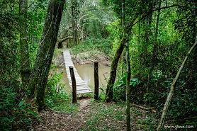 Parque nacional de mbaracayu.jpg