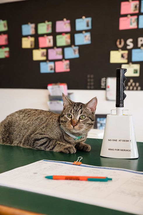Cat on front desk