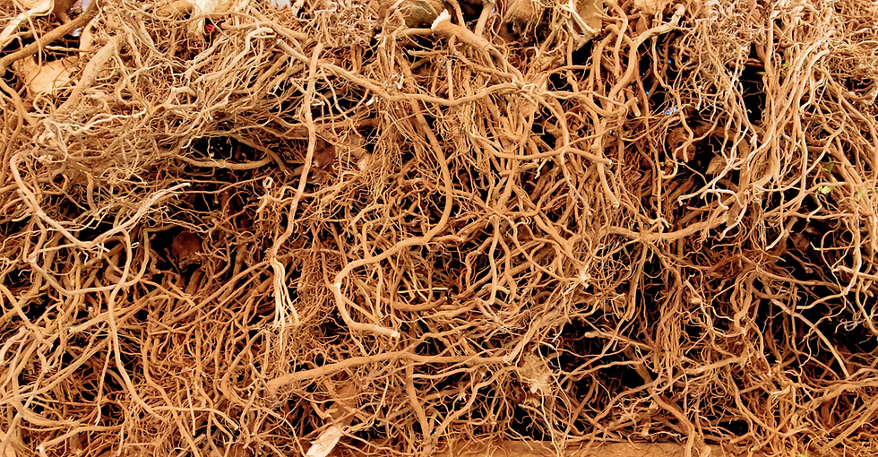 roots%20smaller_edited.png