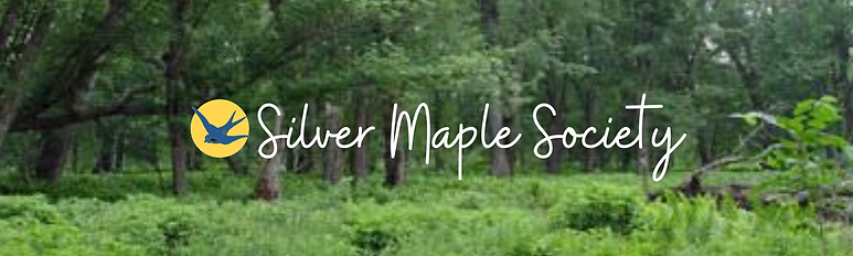 Copy of Silver Maple Society.png