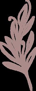 bloem5-paars.png