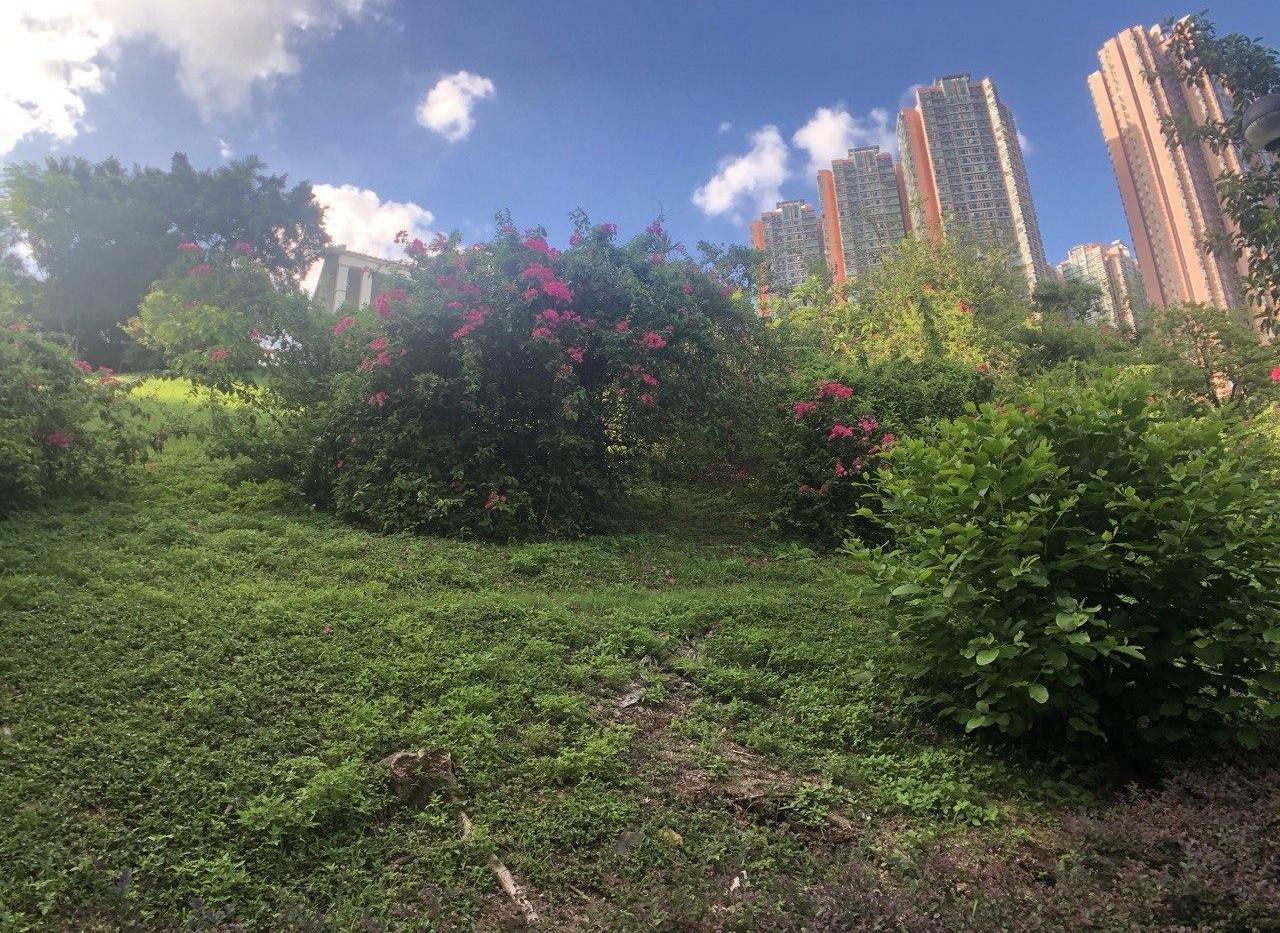 青衣公園5