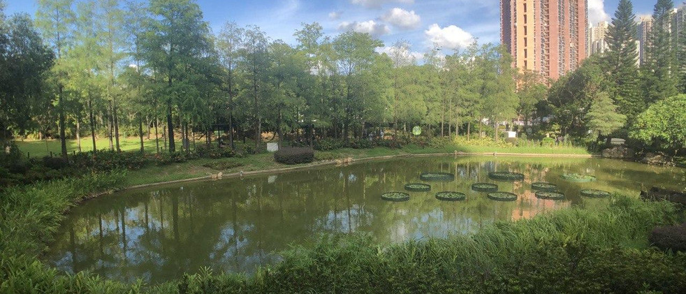 青衣公園2