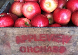 Appleview Orchard.jpg