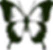 butterfly-309111_1280_edited.png