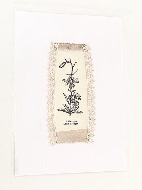 Illustration botanique ancienne dentelle