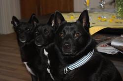 Astrid, Lykke og Vige