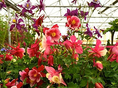 greenhouse-4.jpg