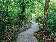 walking-path.jpg