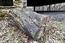 Tree_pct_1_s.jpg