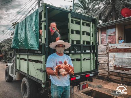 Wie ging es mit unserem Proyecto Pollito (Kükenprojekt) weiter?
