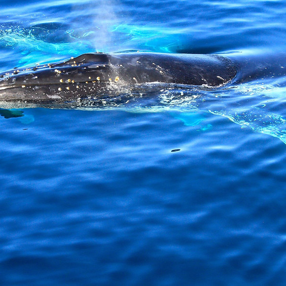 Up Close & Personal: Whale Photography from the True Bule