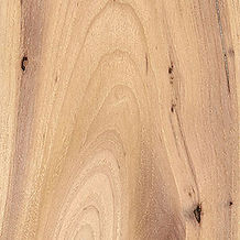 Hickory-300x300.jpg