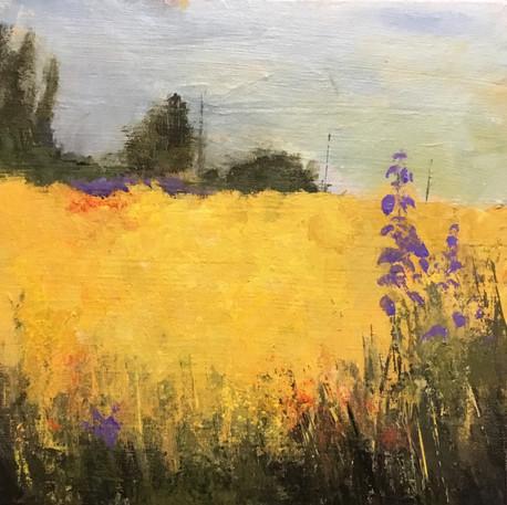 The Mustard Field
