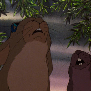 Forest Screening: Watership Down