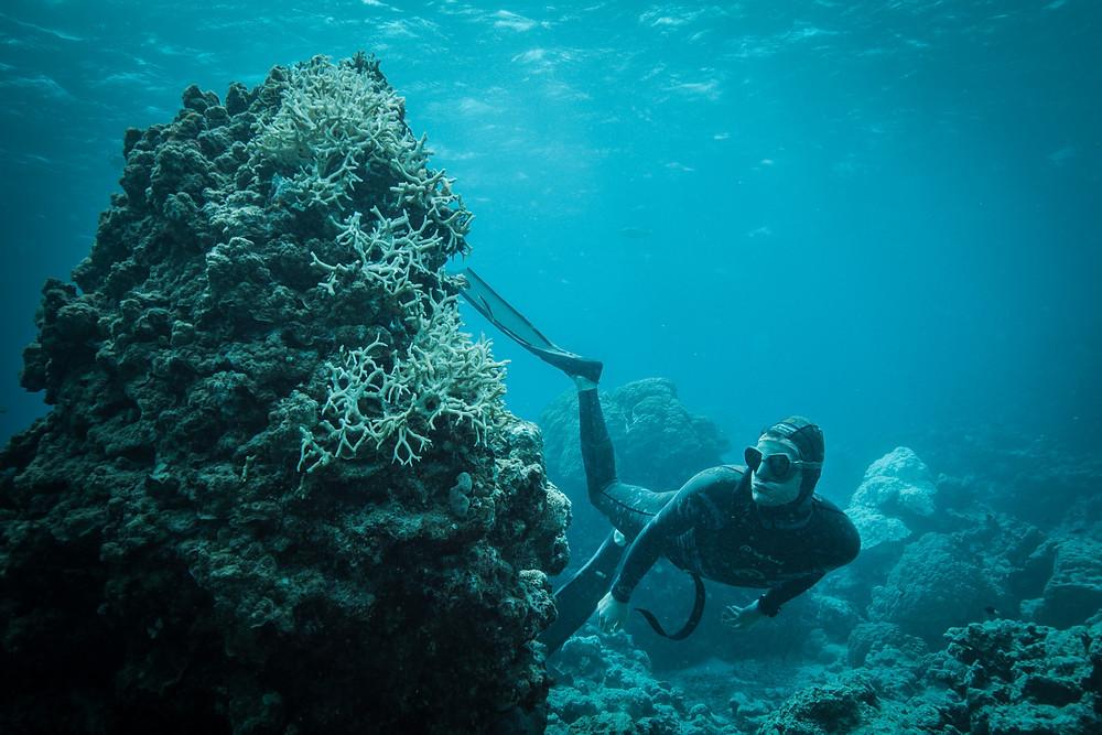 BLUE-elokuva johdattaa katsojansa matkalle, jolla tarkastellaan merien kriittistä nykytilaa.