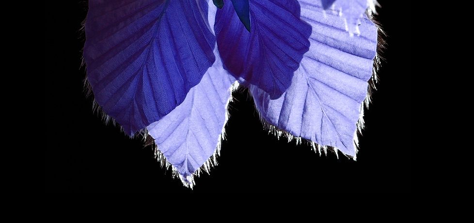 stillbild VÅR3.jpg