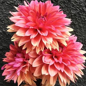 Flowers from The Heirloom Yard on Amelia Island Florida