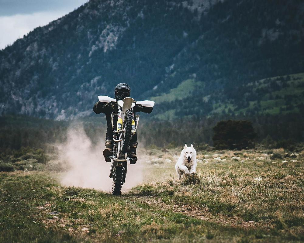תמונה פרונטלית של אופנוע בווילי וצידו כלב רץ עם ארבעת הרגליים באוויר, ברקע הרים ירוקים