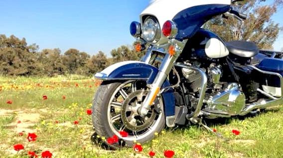 אופנוע הארלי דווידסון מדגם משטרתי בשדה עם כלניות